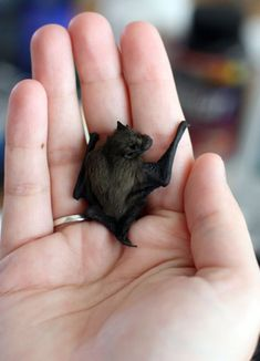 25 Of The Worlds Tiniest Animals | Playbuzz. Bumblebee Bat is the smallest mammal in the world. It weighs 3 oz.ani