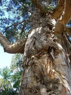 30 Creepiest Trees on Earth [pics] on Pinterest | 15 Pins