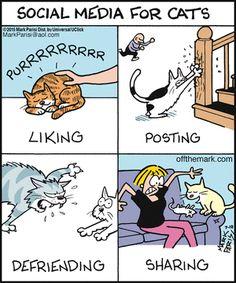 Social Media for Cats   nicko bagaskara on  Google+