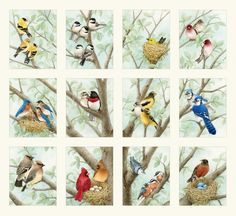 Beautiful Birds-4309-cream panel