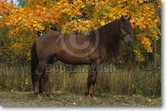 Finnhorse Harness Racing, Show Jumping, Dressage, Country Of Origin, Equestrian, Ph, Horses, Club, Gallery