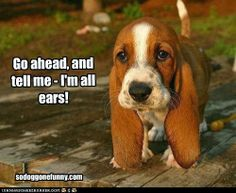 Funny pictures about Just a little basset puppy. Oh, and cool pics about Just a little basset puppy. Also, Just a little basset puppy photos. Baby Basset Hound, Basset Puppies, Hound Puppies, Hound Dog, Cute Puppies, Cute Dogs, Dogs And Puppies, Doggies, Baby Dogs