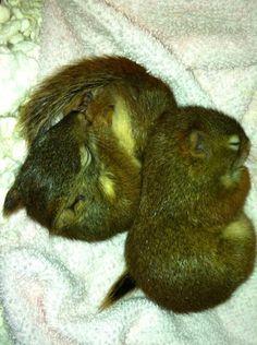 Double cuteness! Critter 1 & 2