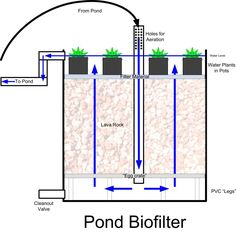 pond biofilter -- We're thinking of adding a small flock of ducks to the homestead for eggs and meat. With that comes the need for water. I'd love something a bit nicer and more natural than just a kiddie pool so building a small water feature is ideal.