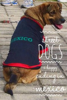 MEXICAN STREET DOGS - With an estimated 16,000 street dogs in Manzanillo the work of A local organization is making a huge impact. The happy adoption ending for one of Manzanillo's homeless hounds.