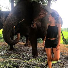 Befriending elephants is fun ask our volunteer @arielledbarry :) #travel #volunteer #elephants #thailand #volsolthailand #volunteeringsolutions #iamvolsoler #natgeo #travelbug #instadaily #instagood #animalsofinstagram #pose #happy #gorgeous #thaielephant #instatraveling #havepassportwilltravel