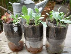 Use A Soda Bottle | Germinate Seeds | A Homesteader's Guide To Sprouting Seeds