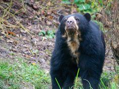 How to Become a Wildlife Rehabilitator -- via wikiHow.com
