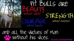 truth about pit bulls.