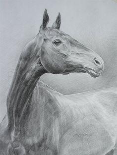 Рисунок головы ахалтекинской лошади,бумага,карандаш, 37х28 Автор: Людмила Елисеева