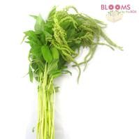 Amaranthus Hanging Green : Wholesale Flowers : Blooms By The Box