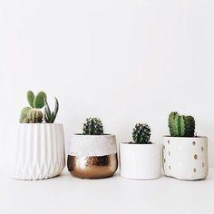 cactus-white-pots.jpg