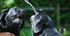 How To Keep Your Drinking Water Safe For Dogs