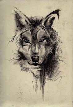 Wolf head illustration.