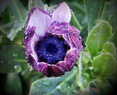 Wild flowers by marilenavaccarini