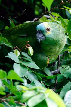 Although rainforests only cover around the total surface area of the Earth, about of the plants and animals live in the rainforest! Rainforest Habitat, Amazon Rainforest, Colorful Parrots, Nature Collection, Australian Animals, Beautiful Birds, Beautiful Places, Nature Photos, Free Stock Photos