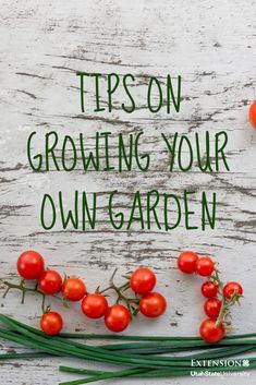 Little compares to the taste of homegrown produce. Planting Vegetables, Growing Vegetables, Fruits And Veggies, Skillet Meals, Grow Your Own Food, Eat Right, Nutrition Education, Hanging Planters, Farmers Market