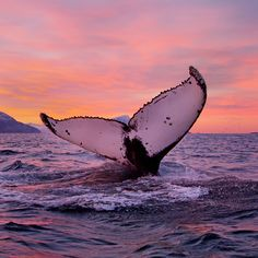 Planen Sie Ihren Urlaub mit kostenlosen Reiseführern und Videos. Erfahren Sie mehr über Fjorde, Nordlicht, Mitternachtssonne, Unterkünfte, Wandern, Angeln und vieles mehr.