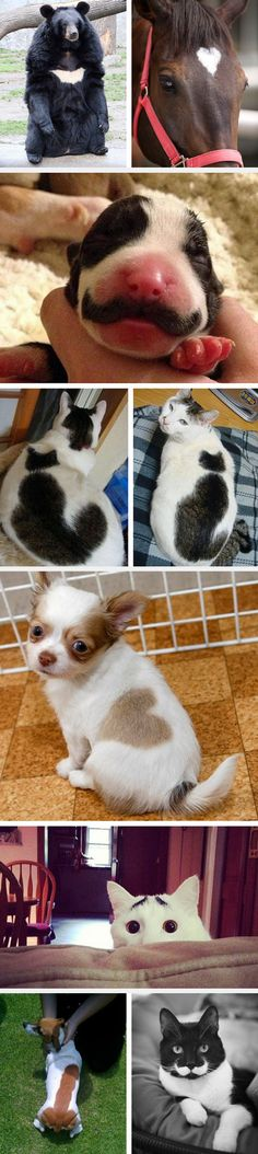 Animals With Unusual Fur Markings