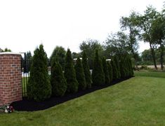 These newly installed Emerald Green Arborvitae's will provide privacy around this in ground pool area.
