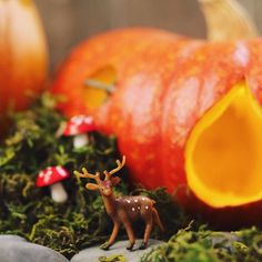 The mushrooms are quite plump this year!  #deer #crafts #adorable #gift #cute #love #instagood #happy #selfie #fun #tiny #fairygarden #fall #halloween