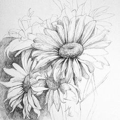Free for personal use Daisy Drawing of your choice Flower Sketches, Drawing Sketches, Art Drawings, Pencil Drawings Of Flowers, Draw Flowers, Drawing Ideas, Sketching, Daisy Drawing, Floral Drawing