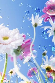 Flowers & Bubbles