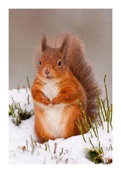 Hey, mein kleiner Schatz, du frierst ja ganz dolle! Komm' ich nehme dich mit ins Warme, hab auch leckere Nüsse daheim!