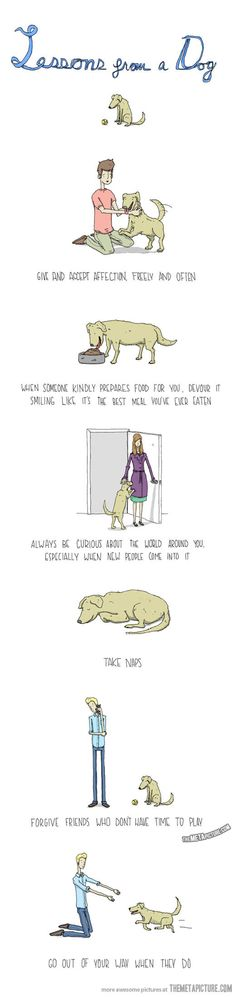 Lessons we can learn from a dog…