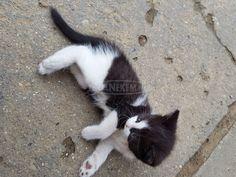 Ingyen elvihető kiscica Cats, Animals, Gatos, Animales, Animaux, Kitty, Cat, Cats And Kittens, Animal