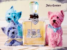 Juicy Couture - Juicy Couture Original