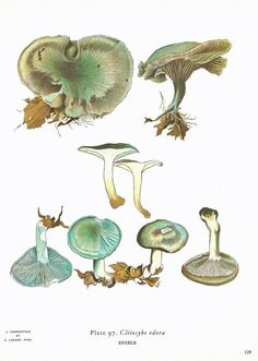 Vintage 1970 Color MUSHROOMS Print Double-sided Original Book PLATE 129 130 Beautiful Aqua Blue Mushroom Forest Nature to Frame.