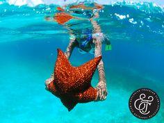 """EXCLUSIVE TRAVELER CLUB. La Isla Saona es la más grande de las islas de República Dominicana, forma parte del Parque Nacional del Este y es uno de los sitios más visitados por turistas. Está catalogada como una """"Piscina natural"""" por su fondo de agua cristalina, a través del que se pueden observar estrellas de mar, corales, peces y muchas especies más. En Exclusive Traveler Club, le invitamos a dar un paseo por este lugar en su próximo viaje. #ETC"""
