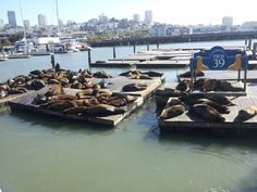 Pier 39.  Home to many sea lions and a great morning walk.
