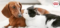 Így szoktass össze egy cicát és egy kutyát