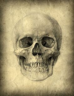 Skull Canvas.....Love It