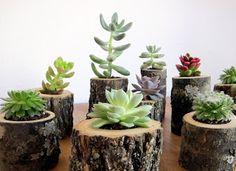 Log Planters for Succulents