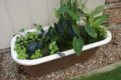 container water gardens, outdoor living, patio, ponds water features, Got an old bathtub Don t toss it stick it in the garden and fill it with aquatic plants and a fountain Small Water Gardens, Container Water Gardens, Water Containers, Container Gardening, Container Pond, Small Water Features, Water Features In The Garden, Garden Tub, Garden Pots
