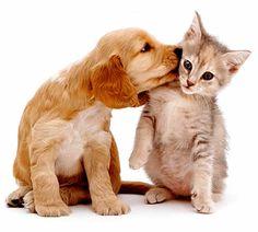 Guia completo dos Primeiros Passos para quem Adotou um Animal   SOS Solteiros