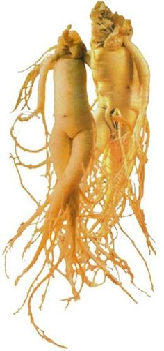 About Korean Red Ginseng