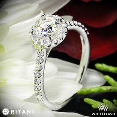 A row of sparkling French-set diamonds add brilliance to the band of this classic diamond engagement ring. A sparkling pavé halo adds brilliance around your choice of center diamond. In whole, the most beautiful way to represent your affection.