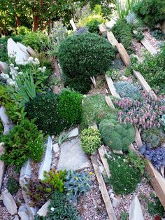 danger garden: Sandy Snyder's crevice garden