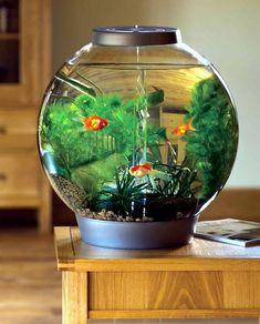Fish Tank Design for Living Room. Fish Tank Design for Living Room. 100 Ideas Integrate Aquarium Designs In the Wall or In the Aquarium Design, Home Aquarium, Aquarium Fish Tank, Fish Tanks, Fish Aquariums, Aqua Aquarium, Mini Aquarium, Living Room Design Images, Living Room Designs