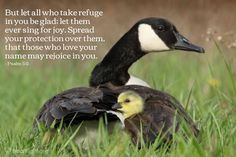 Psalm 5:11—But let all who take refuge in you be glad; let them ever sing for joy. Spread your protection over them, that those who love your name may rejoice in you.
