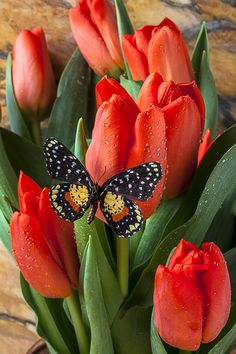 Orange Tulips And Butterfly Photograph by Garry Gay