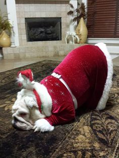 ❤ Waiting for Santa ... requires a little nap ❤ Posted on Baggy Bulldog