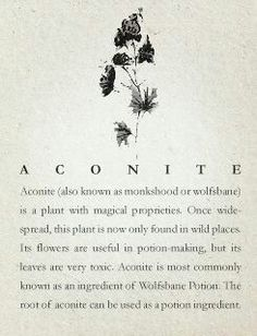 Aconite - Wolfsbane - Monksblood   - Pinned by The Mystic's Emporium on Etsy