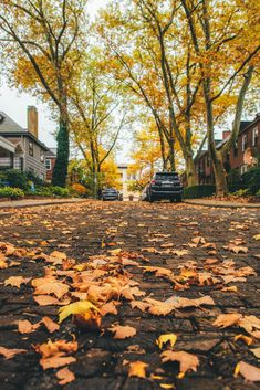 Fallen Leaves, Autumn Leaves, Take The Opportunity, Great Shots, Wide Angle, Pittsburgh, Bucket, Mood, Twitter