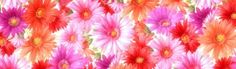 Colorful Flowers Collection Header