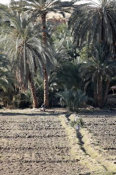 farming along the Nile River Bank, Egypt